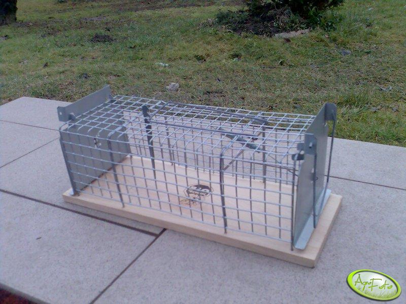 Pułapka żywołowna na szczury