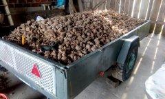 Kartofle