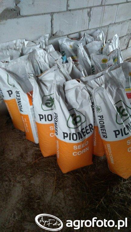 kukurydza Pioneer