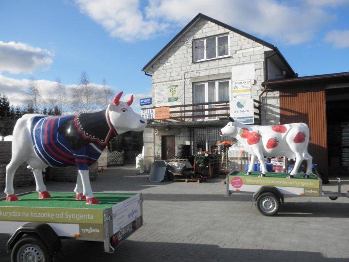 Krowy w trasie 1.JPG