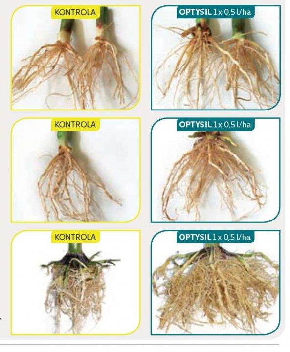 Fot.-Optysil-wplywa-na-lepszy-rozwoj-systemu-korzeniowego-roslin-.jpg