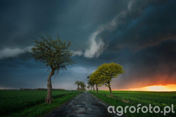 Po prawej rzepak,po lewej pszenica a u góry natura.