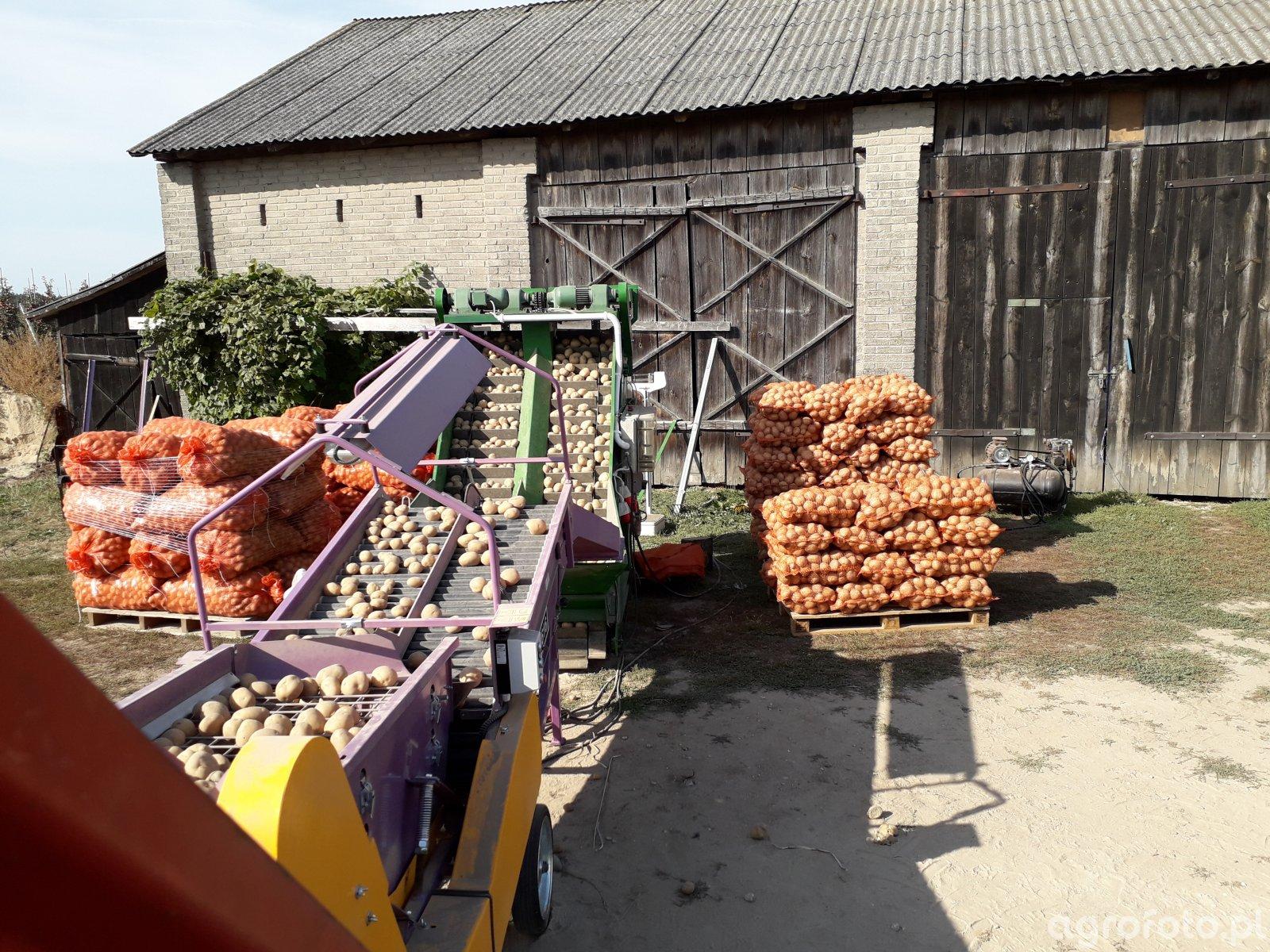 Sortowanie ziemniaka