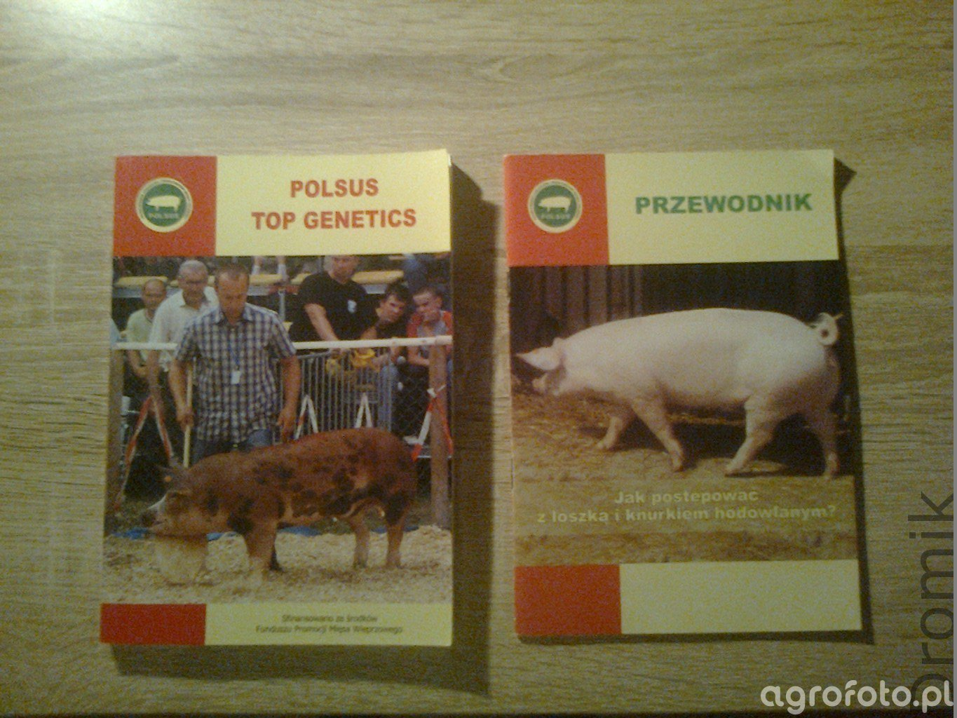 Polsus Top Genetics