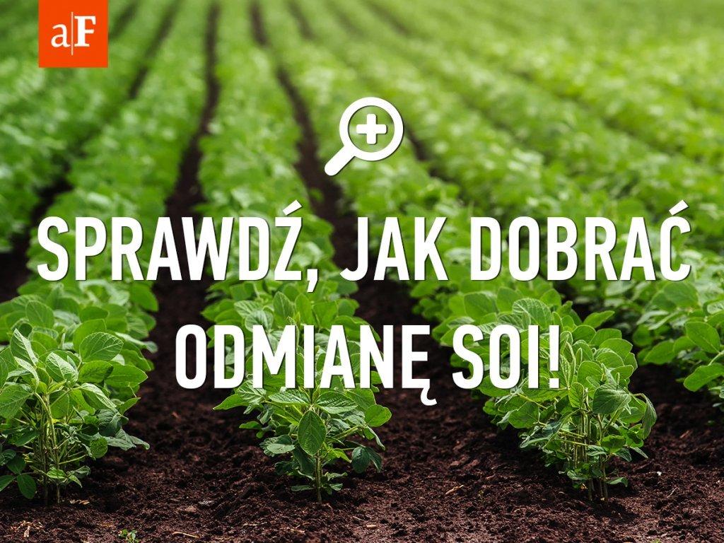 soja agrofakt2