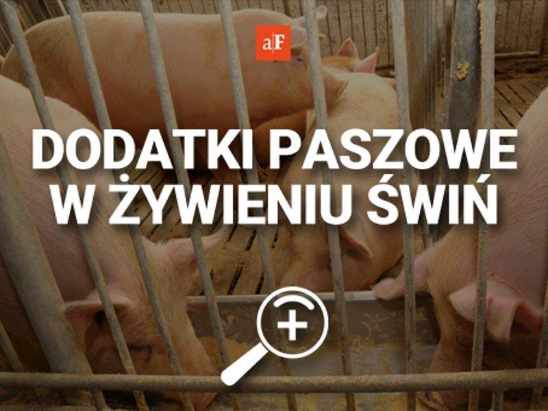 swinie AF