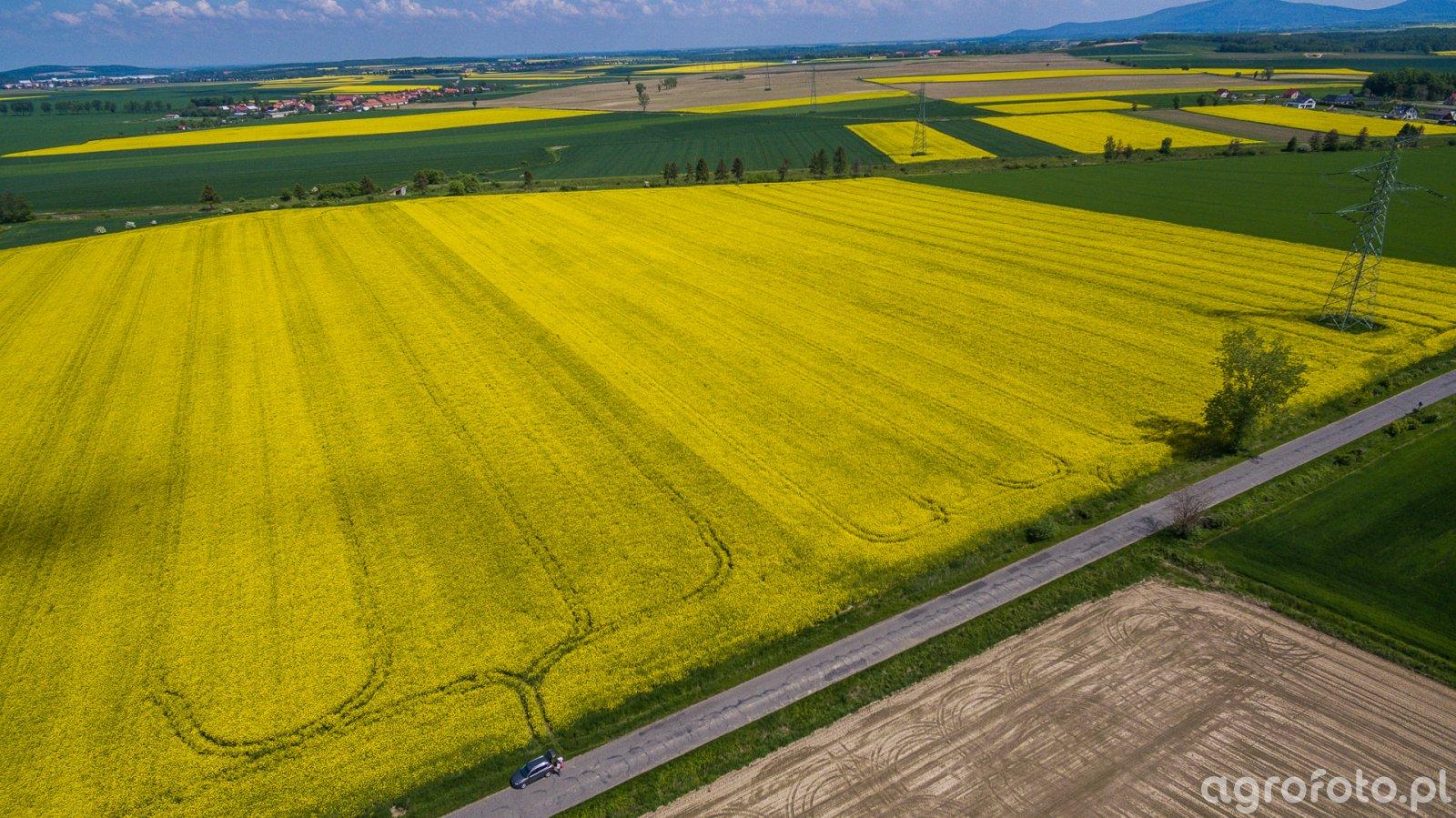 Pola z drona - 19.05.2019