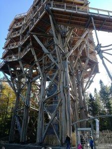 Ciekawa konstrukcja ścieżki w koronach drzew w Krynicy