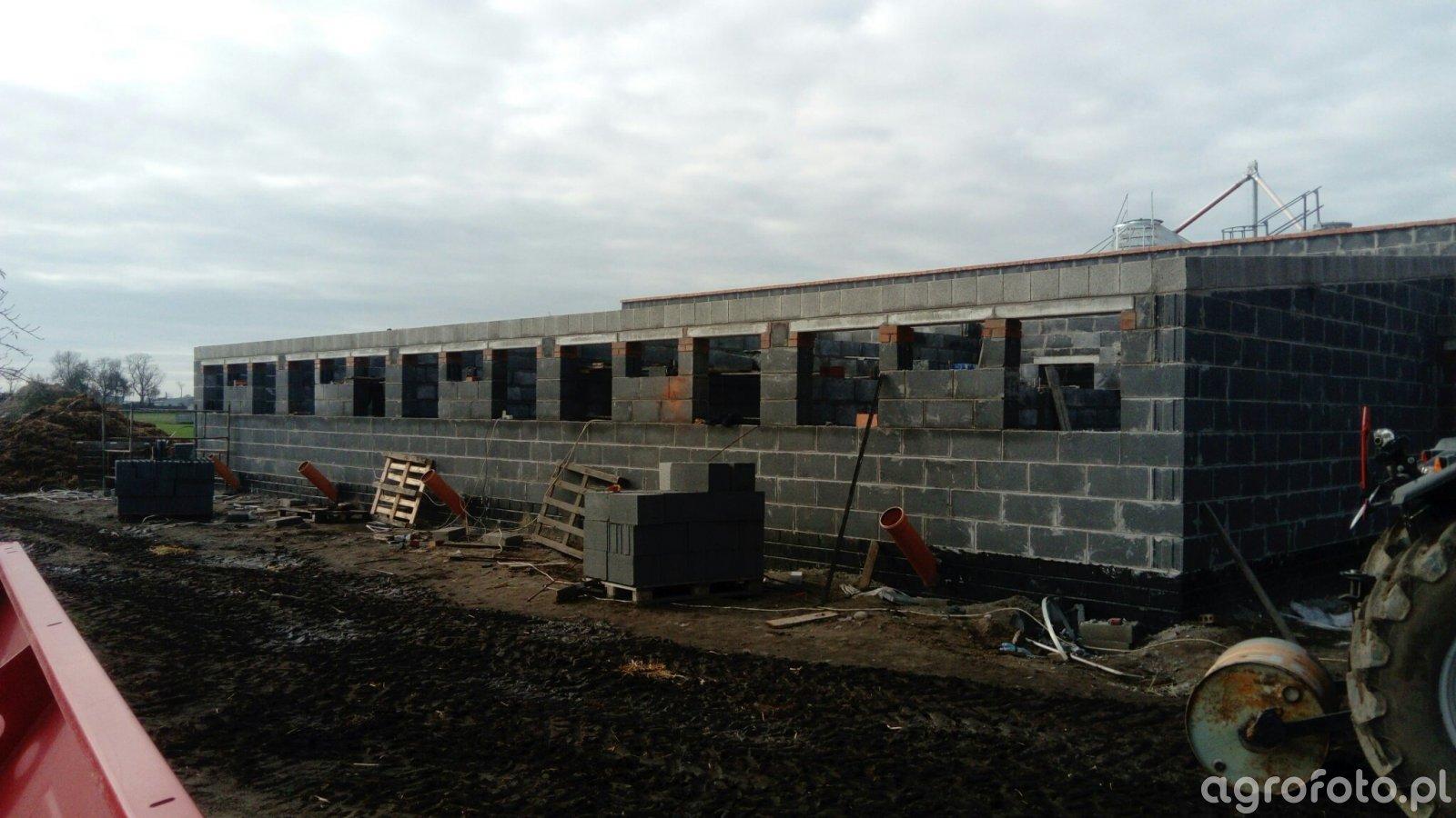 Budowa tuczarni