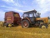 rolnikcichon330