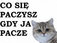 UrsusCzesio
